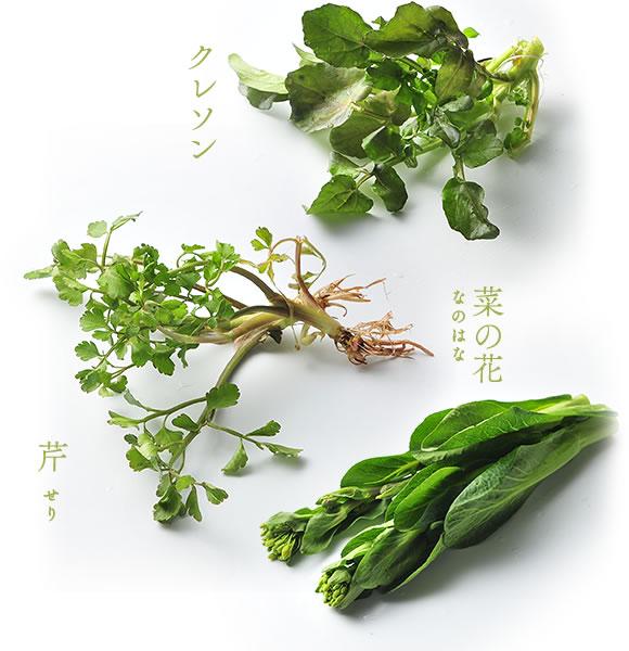 クレソン 芹 菜の花