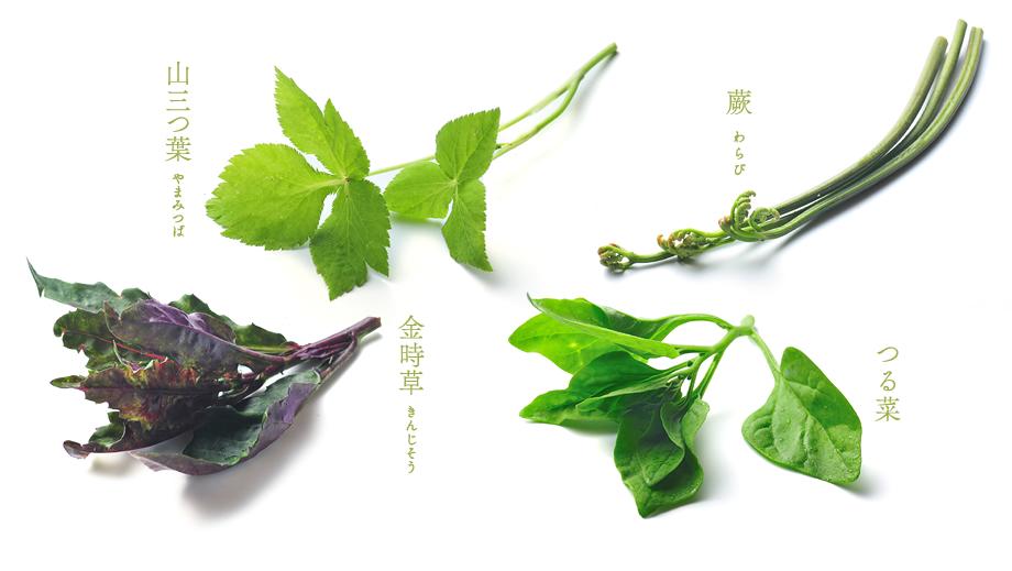山三つ葉 金時草 蕨 つる葉