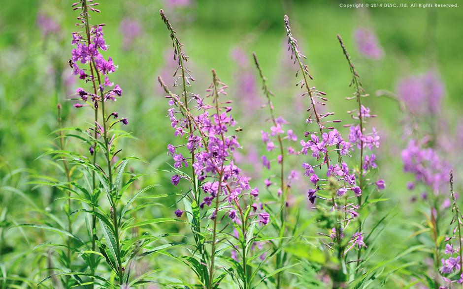 宝台樹やすらぎの森 自然花苑 の花々